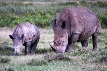 Safari Kenia Safari Urlaub
