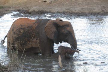 Kenia Urlaub Privat Safari