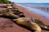 Entspannte Seelöwen-Gruppenreise-Galapagos-Ecuador-Reisekontor-Schmidt