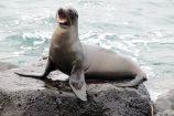 Gruppenreise Galapagos Ecuador