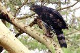 Kenia Reisebricht Feedback Ostafrika Rundreise - Vogel in Kenia - Bewertung Ostafrika Rundreise