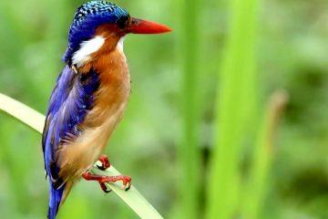 Kenia Reisebricht Feedback Ostafrika Rundreise - Vogel in Kenia