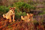 Kenia Urlaub Bewertung