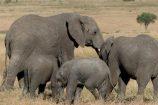 Rundreise Kenia Tansania auf Safari