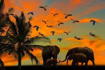 Kenia Safari intensiv Keniaspezialist Reisekontor Schmidt Keniaurlaub