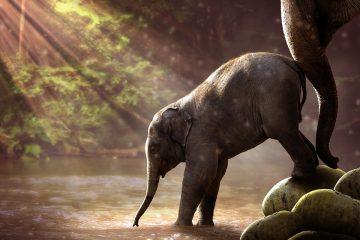 Elefantenbaby Kenia Safari