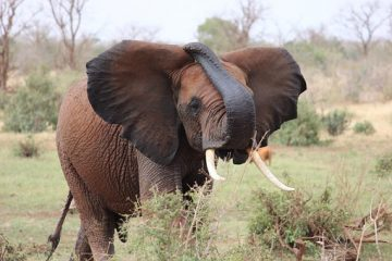 Kenia Safari Reise Elefanten Keniaurlaub