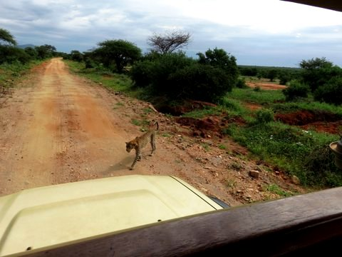 auf Kenia Safari Tour im Tsavo West Nationalpark mit KeniaSpezialist Keniaurlaub.de Reisekontor Schmidt