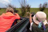 Kenia Reise mit Masai Mara Safaritour mit KeniaSpezialist Keniaurlaub.de Reisekontor Schmidt Leipzig, Safari Tour - Masai Mara Große Tierwanderung