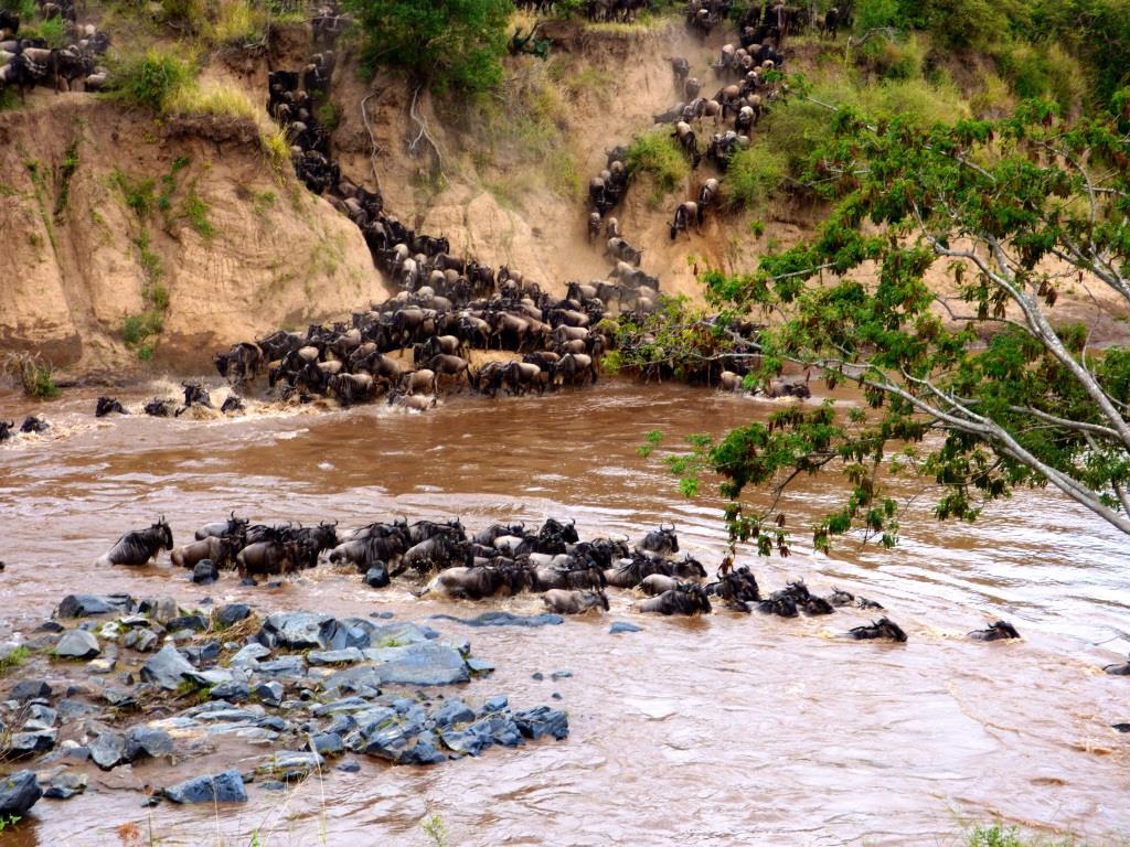Kenia Reise mit Masai Mara Safaritour mit KeniaSpezialist Keniaurlaub.de Reisekontor Schmidt Leipzig, Safari Tour - Gnu Crossing Mara River Masai Mara