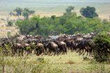 Kenia Reise mit Masai Mara Safaritour mit KeniaSpezialist Keniaurlaub.de Reisekontor Schmidt Leipzig, Safari Tour - Große Tierwanderung in der Masai Mara