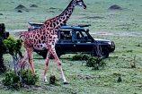 Safari in der Masai Mara - Reisegruppe des Kenia Spezialist keniaurlaub.de Reisekontor Schmidt Leipzig