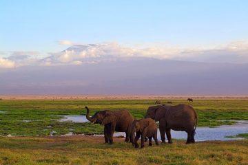Elefanten im Amboseli NP Kenia Safari Tour