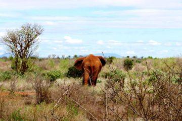 Kenia Safari Kundenbewertung Keniaurlaub Keniaspezialist Reisekontor Schmidt