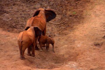 Kenia Safari Tour Elefanten