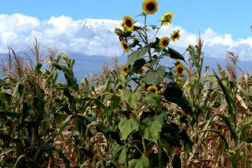 Kenia Reise zum Kilimanjaro mit KeniaSpezialist keniaurlaub.de Reisekontor Schmidt LEipzig
