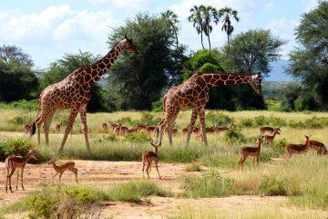 Während einer Kenia Safari mit KeniaSpezialist Keniaurlaub.de Reisekontor Schmidt Leipzig
