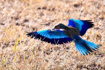 Vogel während einer Kenia Safari - Keniaurlaub vom KeniaSpezialist