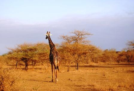 Wasserknappheit in Kenias Norden